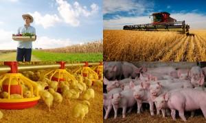 Agricultura Agroindustria