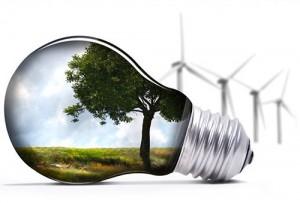 Consultoria Ecologica