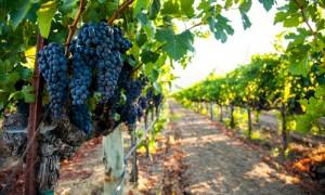 negocios rentables vinos