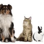 Ideas de negocios sobre mascotas