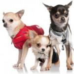 Fabricacion de ropa para Perros
