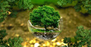 18 Negocios Rentables Ecológicos 2021 / 2022