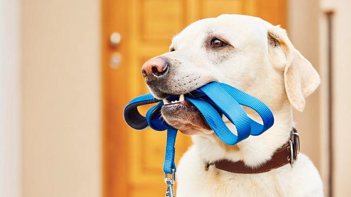 Cómo abrir una tienda de artículos para mascotas